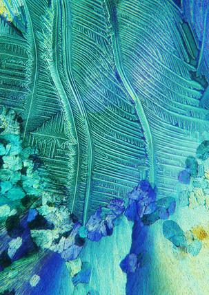 436-07 TRIS, Ureum.jpg