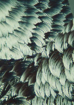709-22 L-Asparaginezuur.jpg