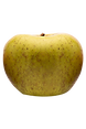 """A firm, crisp and white-fleshed apple with a balanced sweet & tart """"honeyed"""" flavor. Good for eating fresh, salads and baking."""