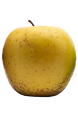 A russet-resistant selection of the Golden Delicious apple. Fruit is firm, sweet, juicy and large is size. Good for eating & cooking.