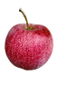 A crisp, juicy, flavorful & tart apple with a green & red-striped skin. Famous for sauce & baking, as well as eating fresh.