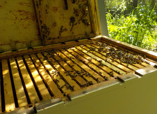 First hive check of 2020