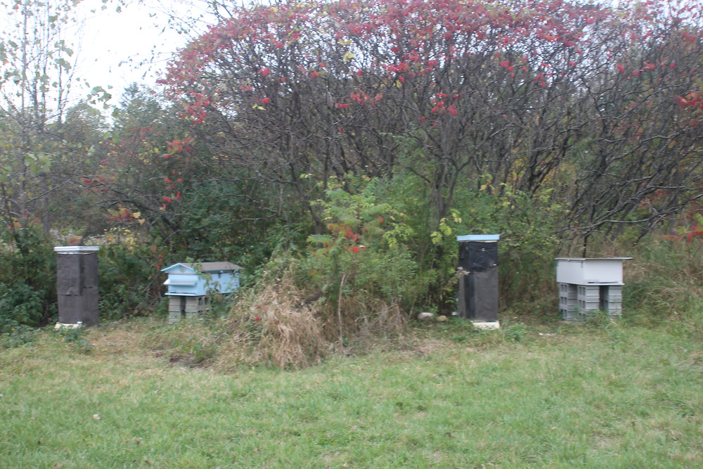 Apiary ready for winter