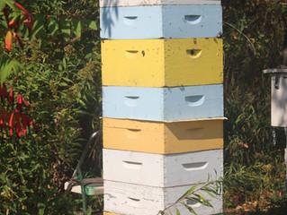 Hive Update