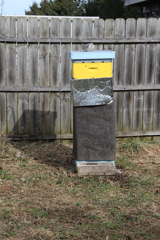 surviving vertical hive