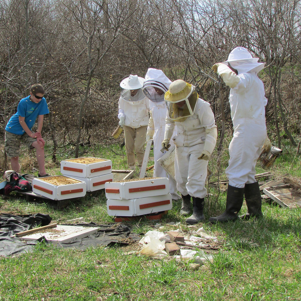 Opening the overwintered hives