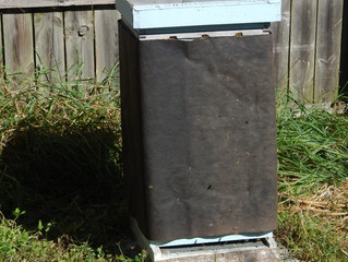 Update on the hives