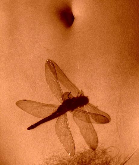 Dragonfly belly (Machias, Maine)