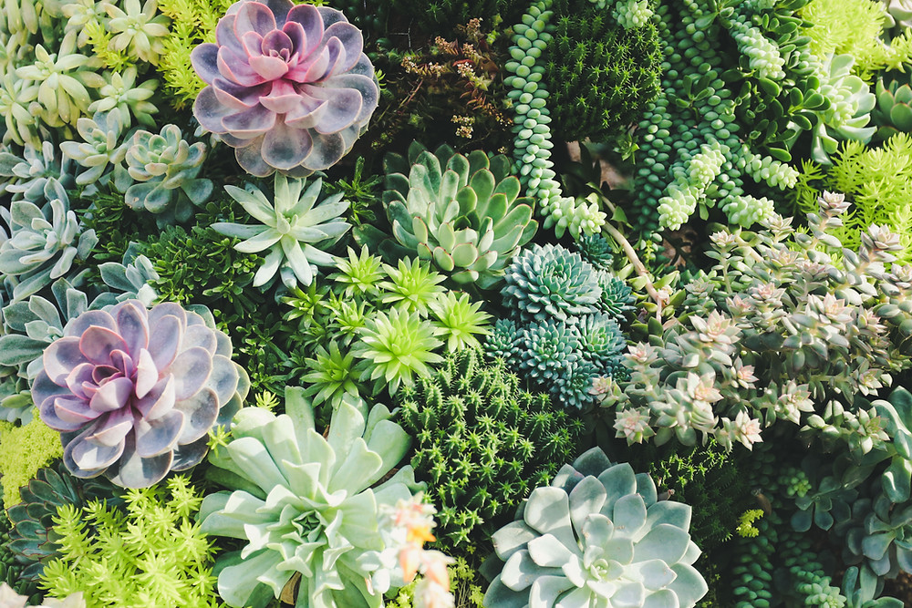 Xeriscaping Plant Options for Colorado Springs