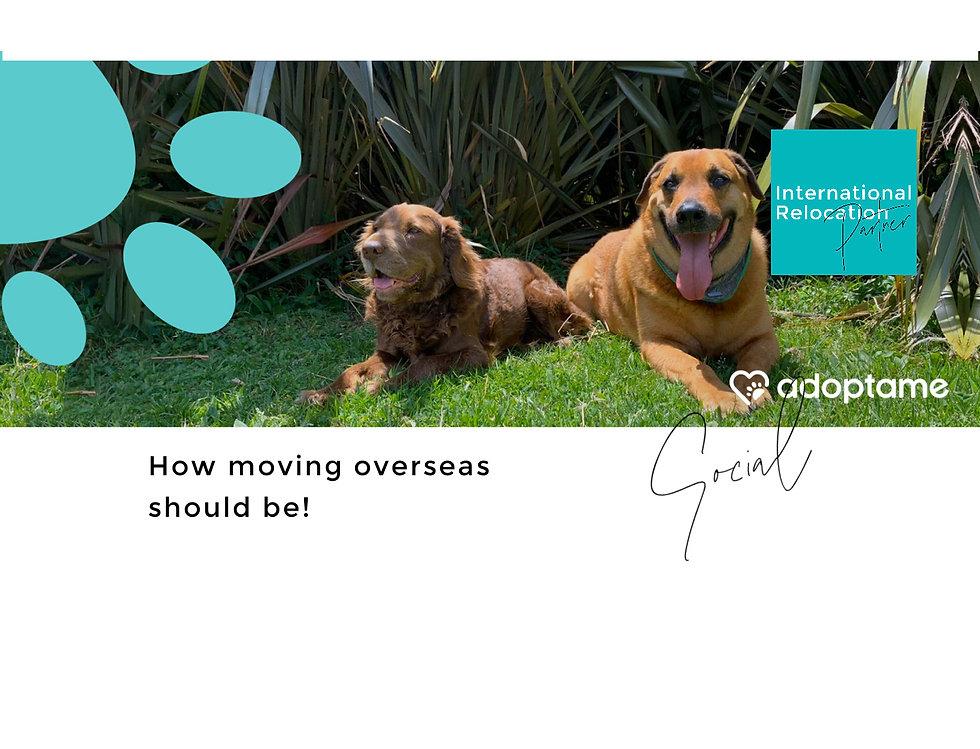 Adopt Dog Corporate Social Responsibilit
