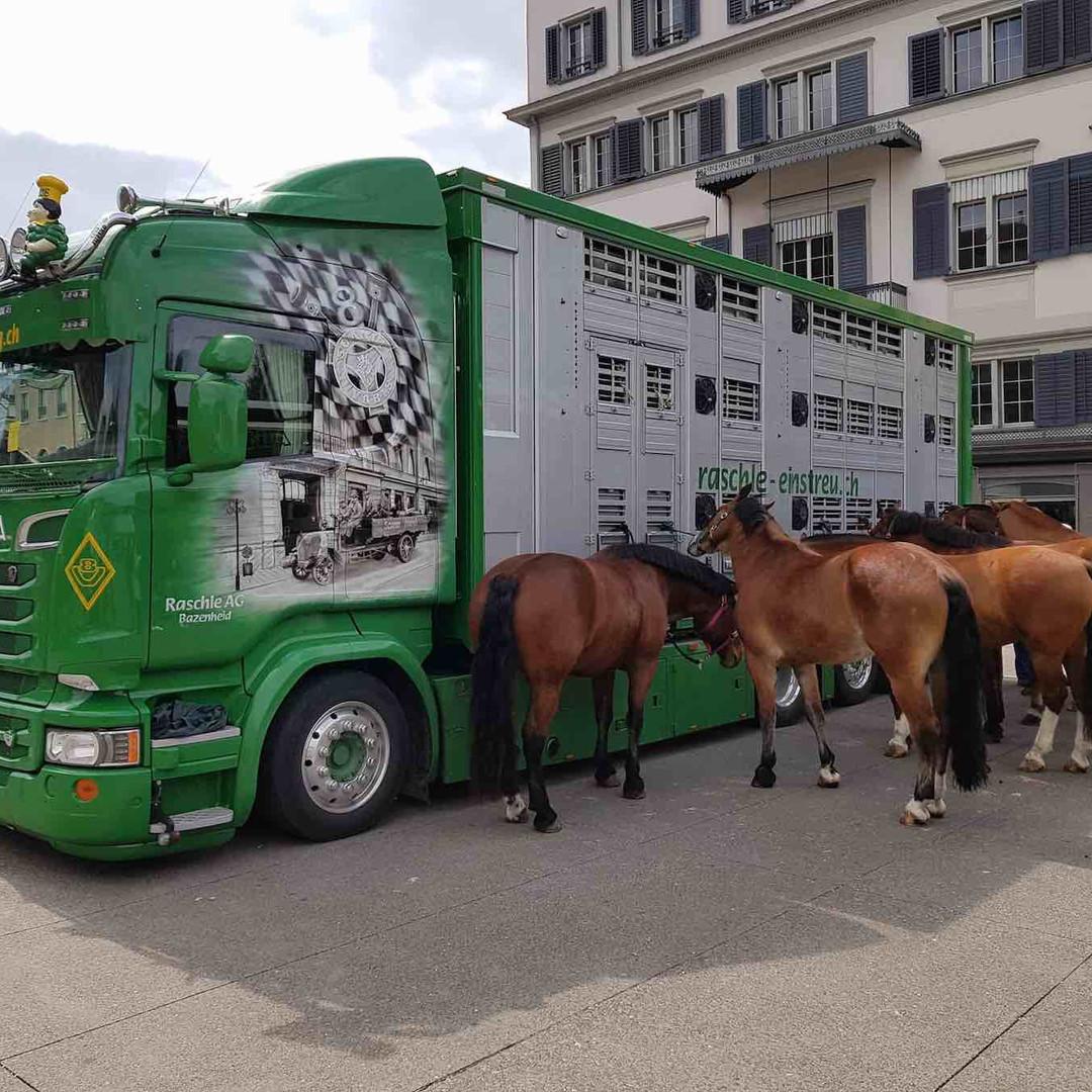 raschle_Tiertransporte9.jpg