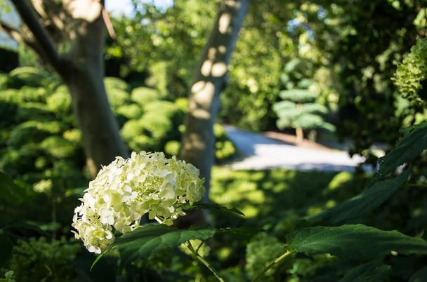 Kappeler Gartenwelt