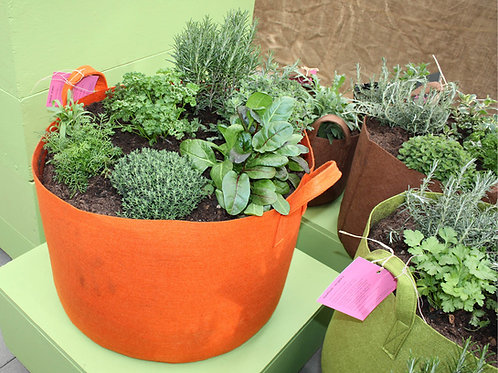 Pflanze dein eigenes Gemüse!