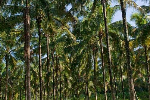 Coconut farm for sale Palakkad