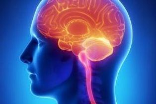 Coaching Interantional _ Méthode neurosciences