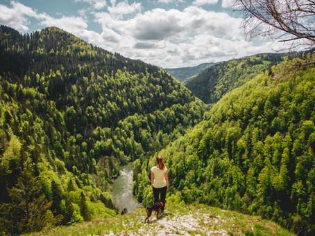 Féérie verte dans les Franches-Montagnes vers les Sommêtres