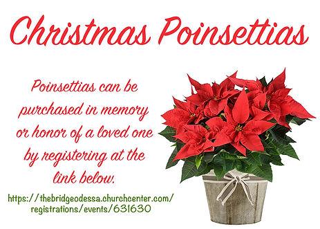 Poinsettias Sales.jpg