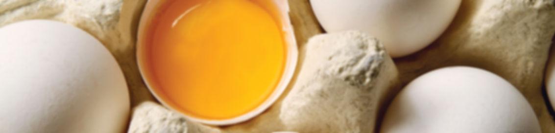 Liquid Eggs RDT Importers