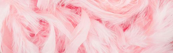 Las plumas de color rosa