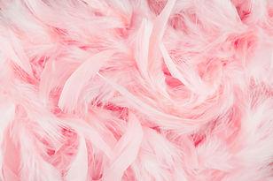ピンクの羽