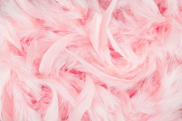 růžové peří