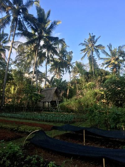 Bali camp.jpg