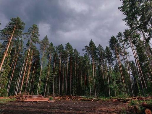 Минприроды пытается забрать у россиян право выращивать лес