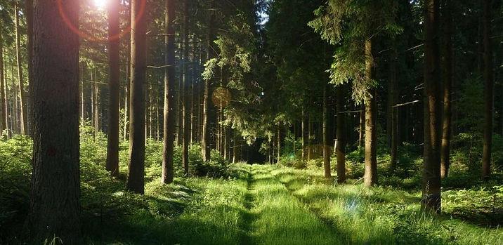 Igra-solnechnogo-sveta-v-utrennem-lesu-1