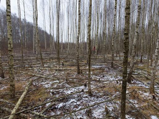 VTimes. Статья: Два мифа, которые убивают лес