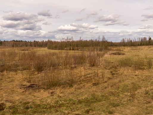 Экологов беспокоит быстрое исчезновение лесов