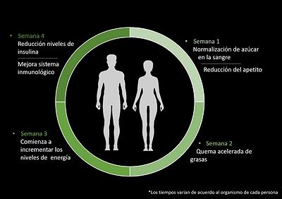 ciclo cetogenico.png