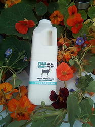 Cornish Goat milk