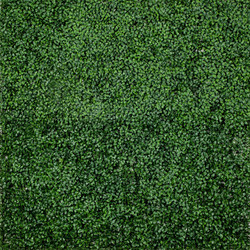 Green Hedge Wall