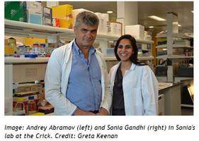 파킨슨병의 분자 메커니즘 연구