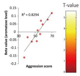 성호르몬 생성 효소와 성격과의 관계에 관한 연구