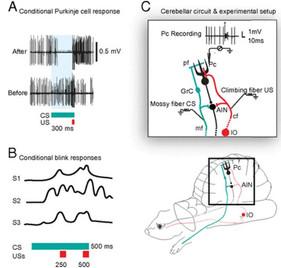 뉴런의 일시적인 패턴 학습