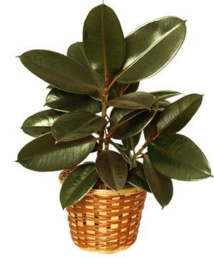 $30 House Plant