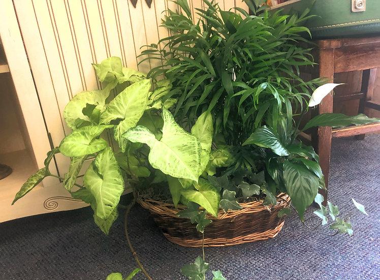 $100 House Plant