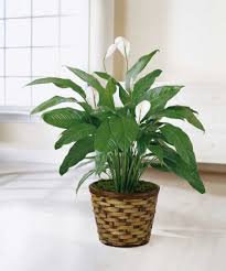 $90 House Plant