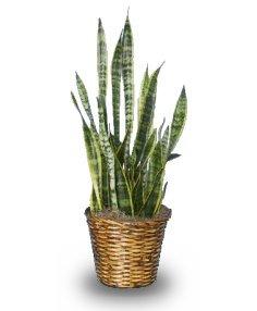 $60 House Plant