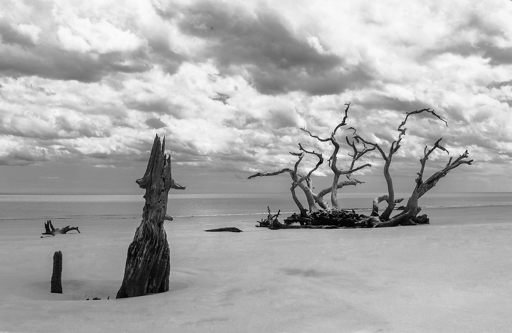 The skeletons of trees poking through Driftwood Beach on Jekyll Island in Georgia