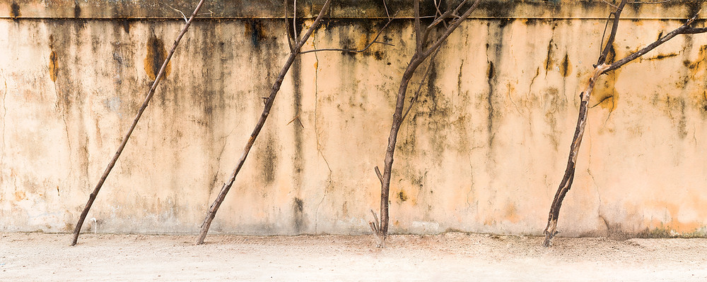 Four tree trunks in front of a weathered beige wall in the Maldives