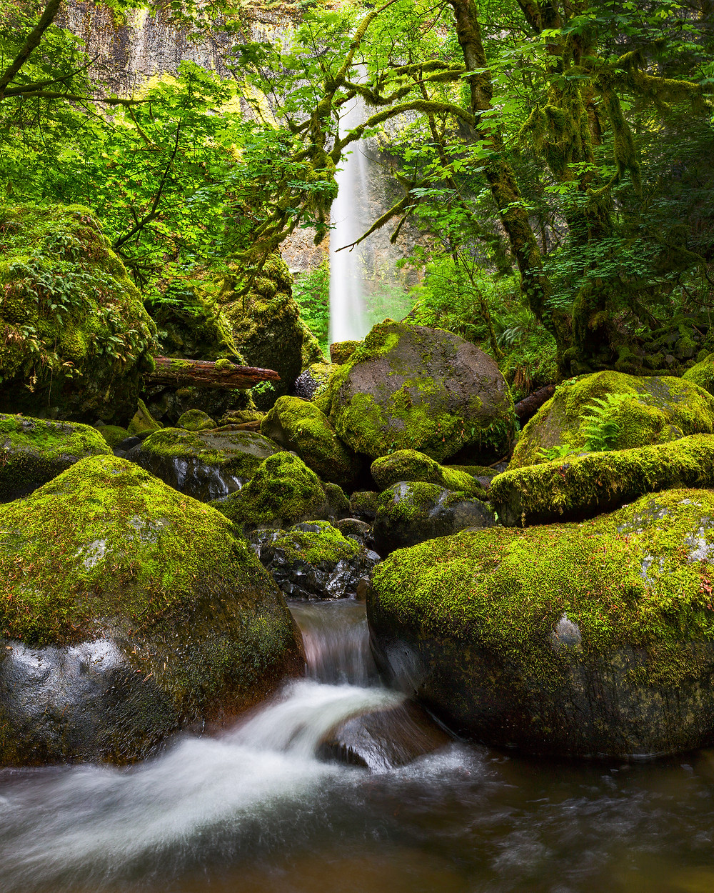 A waterfall in Oregon's Columbia River Gorge pours at the end of a natural tunnel of spring leaves and moss covered rocks as the resulting creek winds through the green landscape.