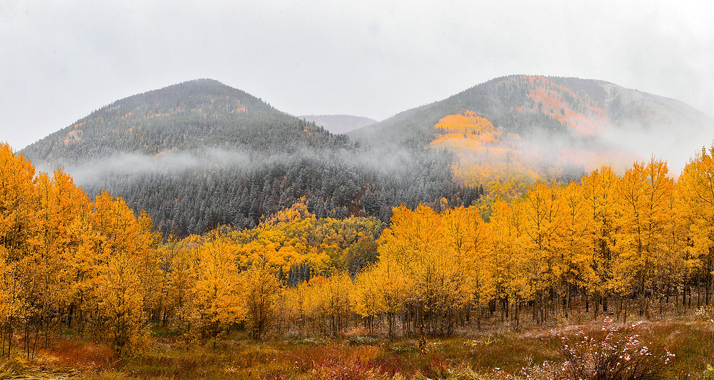 Fog hangs over frosted mountains surrounded by gold fall aspens
