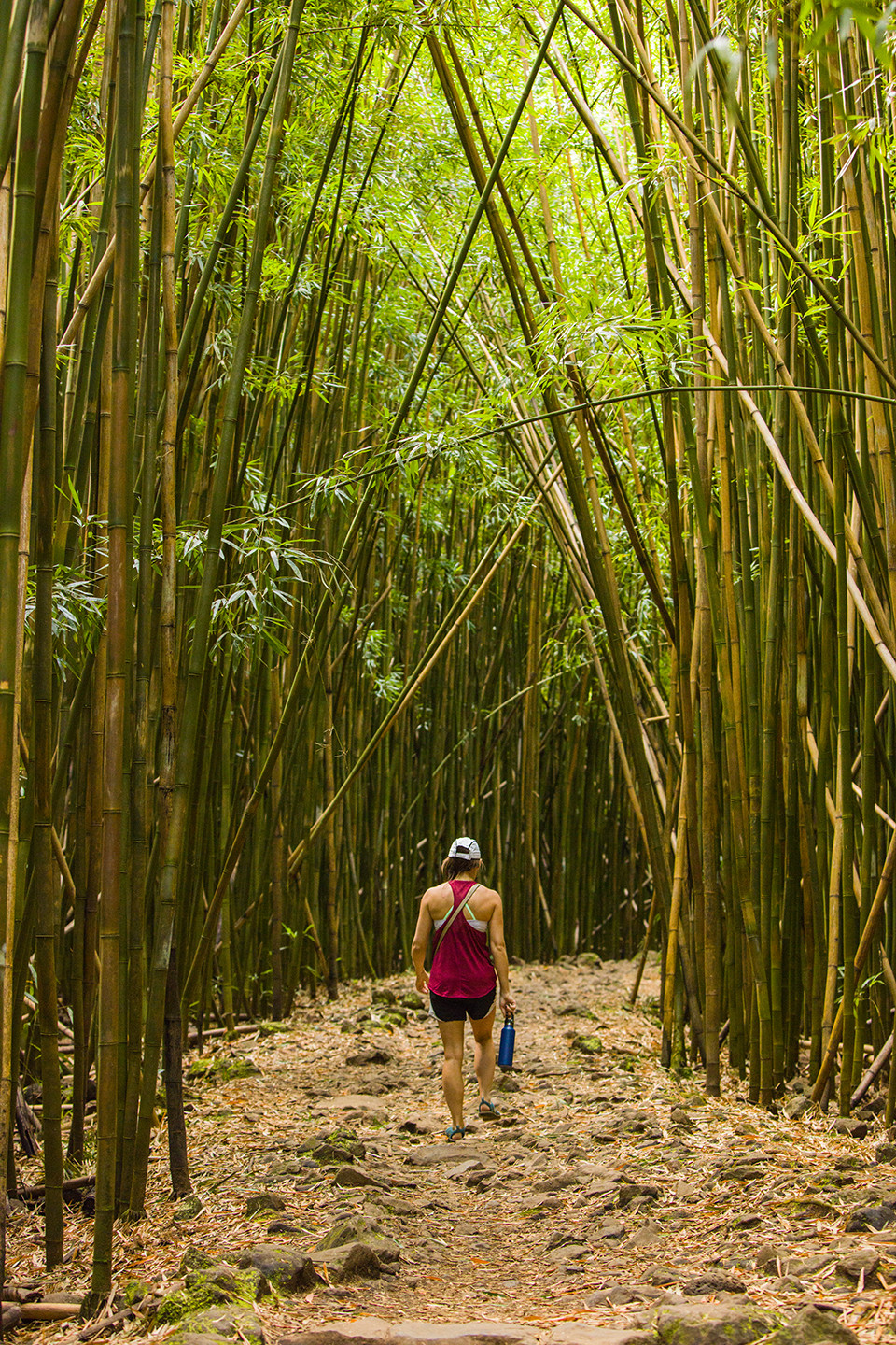 Hiker walking through the bamboo forest in Haleakala National Park in Maui.