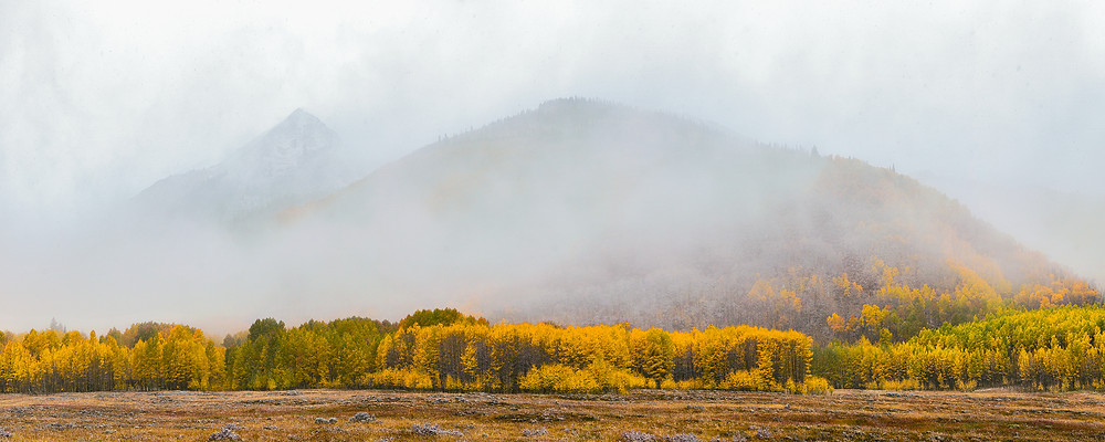 Rocky Mountain peaks rise above bright yellow aspens into fog
