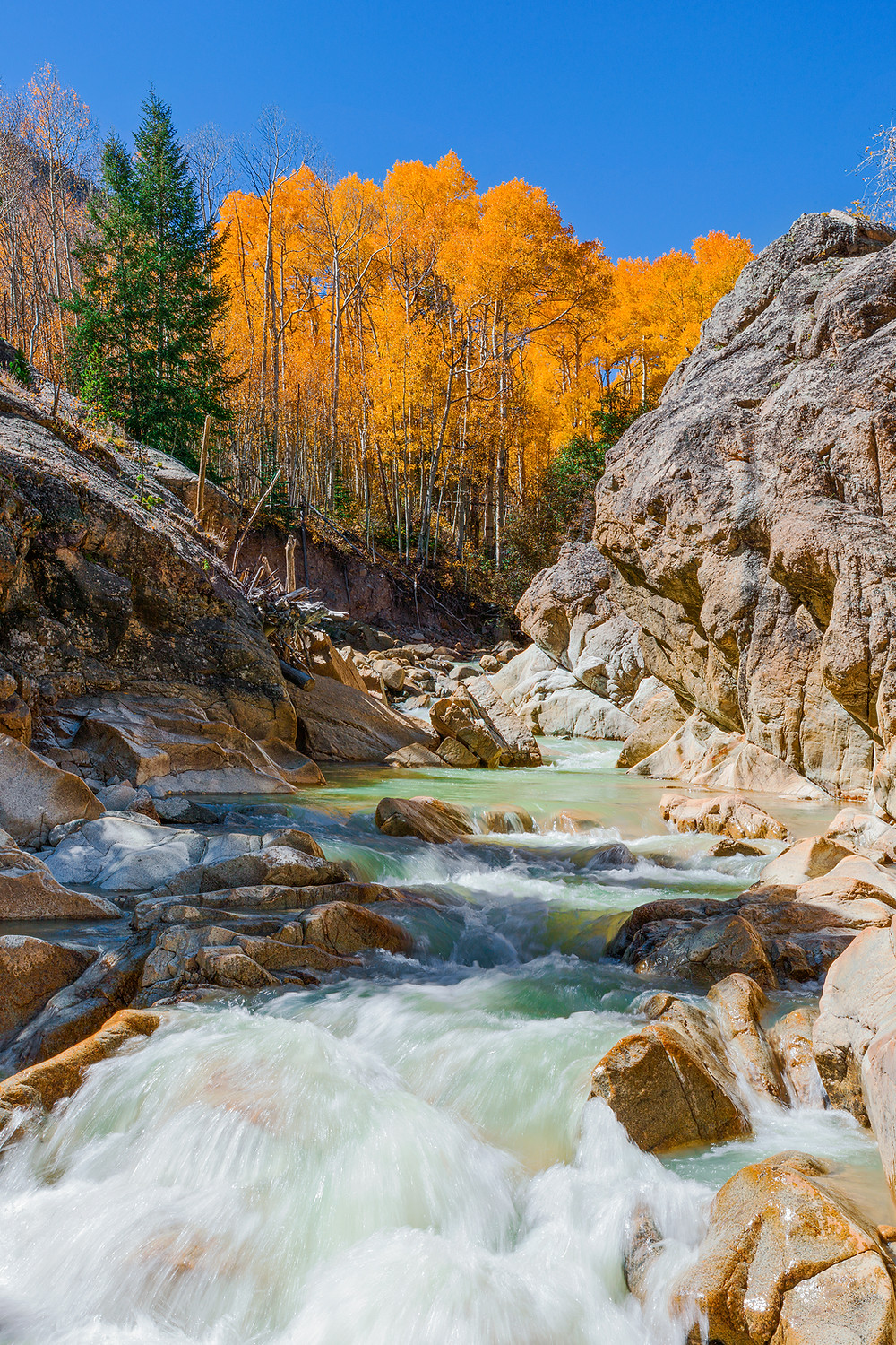 A Colorado creek cuts through a gorge surrounded by gold aspen trees on a cloudless afternoon