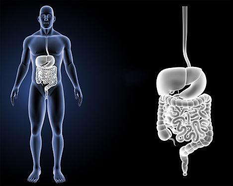 El-sistema-digestivo-según-la-MTC copia