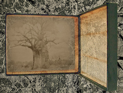 Baobab: Memories of My Father #1