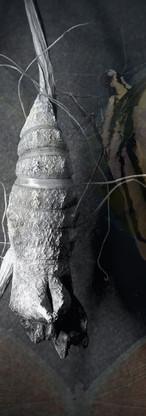 Abandoned Chrysalis #1, photomontage.jpg